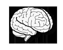 تقویت حافظه و یادگیری