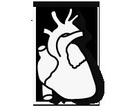 قلب و عروق